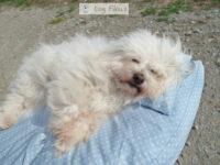 Bio Hundebett aus Naturmaterial Dog Filous